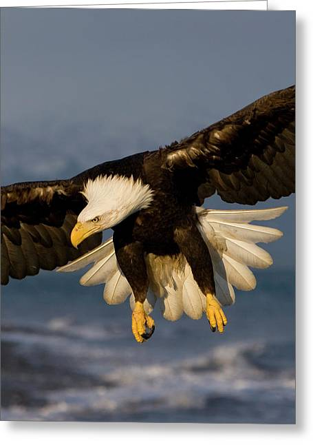 Bald Eagle In Action Greeting Card