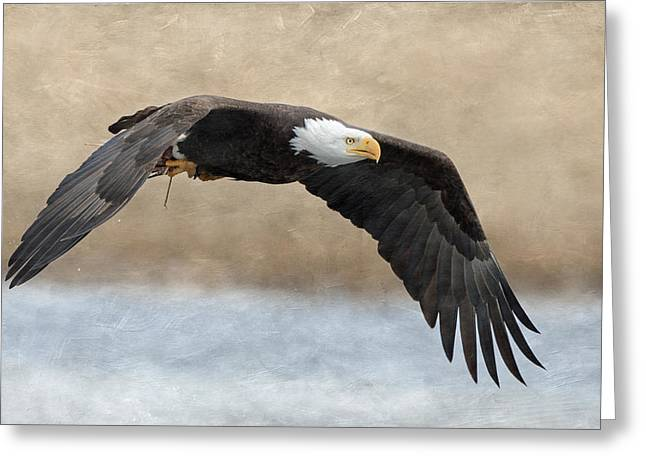 Bald Eagle In Flight Greeting Card by Angie Vogel