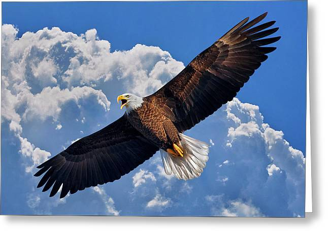 Greeting Card featuring the photograph Bald Eagle In Flight Calling Out by Justin Kelefas