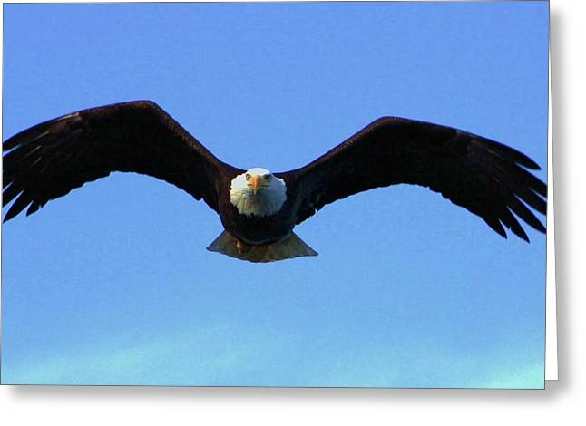 Bald Eagle Intimidation Greeting Card by Dean Edwards