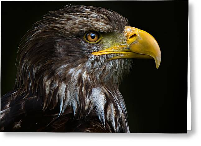 Greeting Card featuring the photograph Bald Eagle by Joerg Lingnau