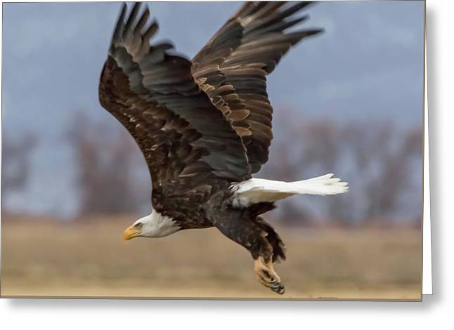 Bald Eagle Lift Off Greeting Card by Marc Crumpler