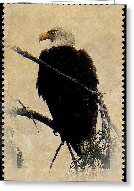 Greeting Card featuring the photograph Bald Eagle by Lori Seaman