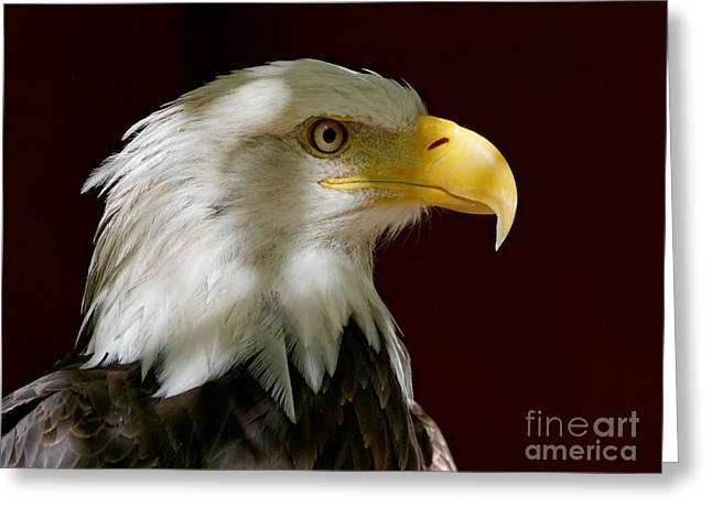 Bald Eagle - Majestic Portrait Greeting Card