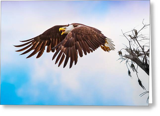 Bald Eagle  Greeting Card by Mark Andrew Thomas