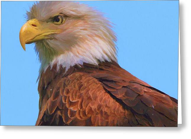 Bald Eagle On Blue Greeting Card by Dan Sproul