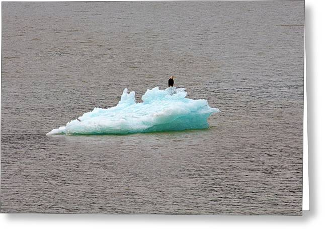 Bald Eagle On Blue Glacial Ice Greeting Card
