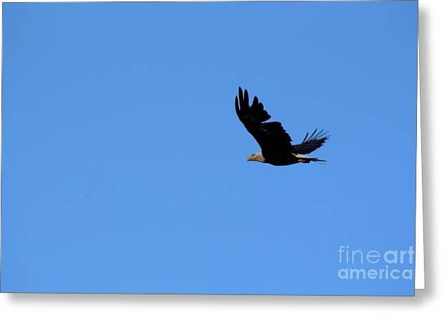 Bald Eagle Over Roseland Lake Greeting Card