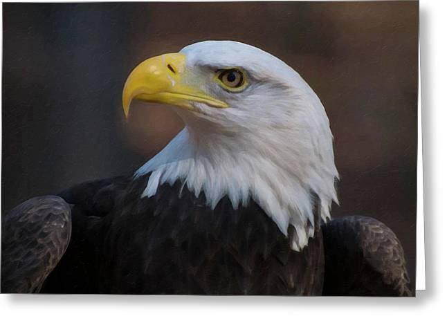 Bald Eagle Painting Greeting Card by Chris Flees