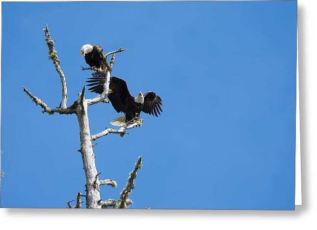 Bald Eagle Pair Greeting Card