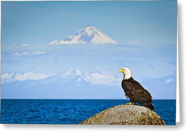 Bald Eagle Perched On A Rock Greeting Card