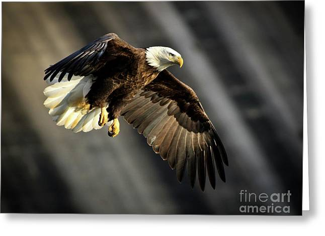 Bald Eagle Prepares To Dive Greeting Card