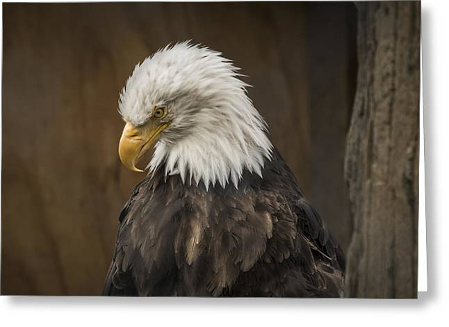 Bald Eagle Greeting Card by Robin Williams