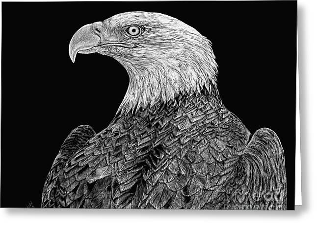 Bald Eagle Scratchboard Greeting Card by Shevin Childers