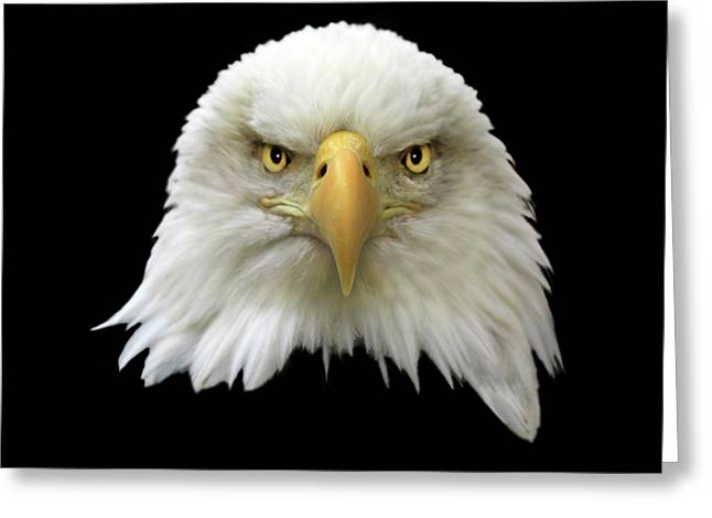 Bald Eagle Greeting Card by Shane Bechler