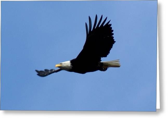 Bald Eagle Soaring High Greeting Card by Ben Upham III