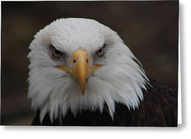 Bald Eagle Stare  Greeting Card