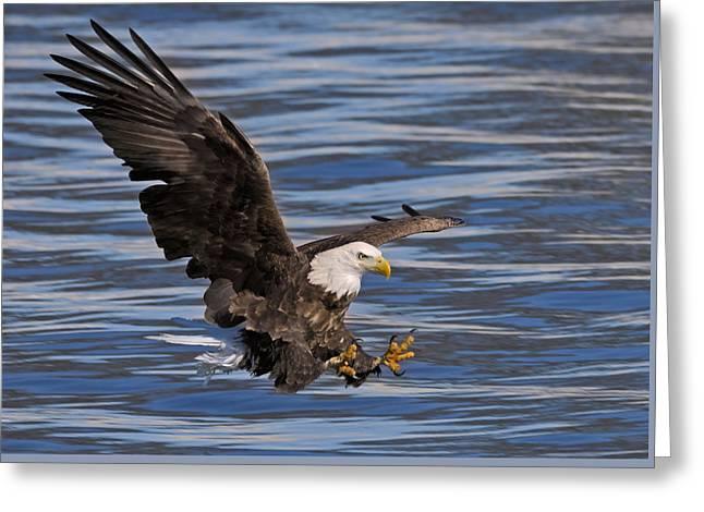 Bald Eagle Strike Greeting Card