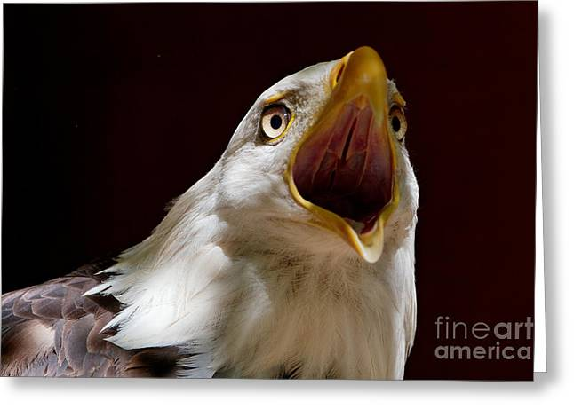 Bald Eagle - The Great Call Greeting Card