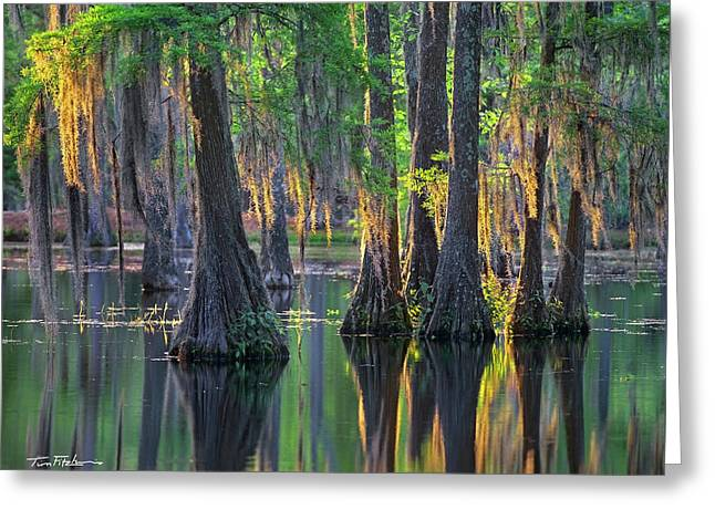 Baldcypress Trees, Louisiana Greeting Card