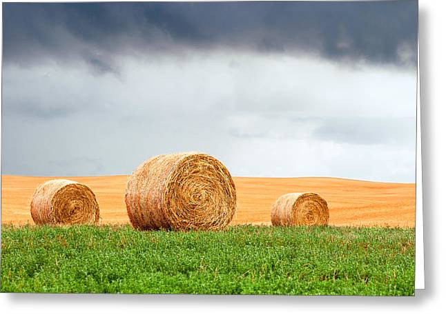 Bales And Layers Greeting Card by Todd Klassy