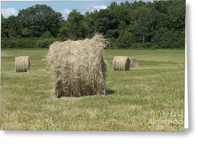 Bales Of Hay In New England Field Greeting Card by Erin Paul Donovan
