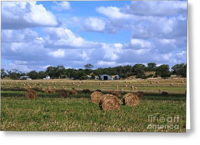 Bales Of Hay Greeting Card