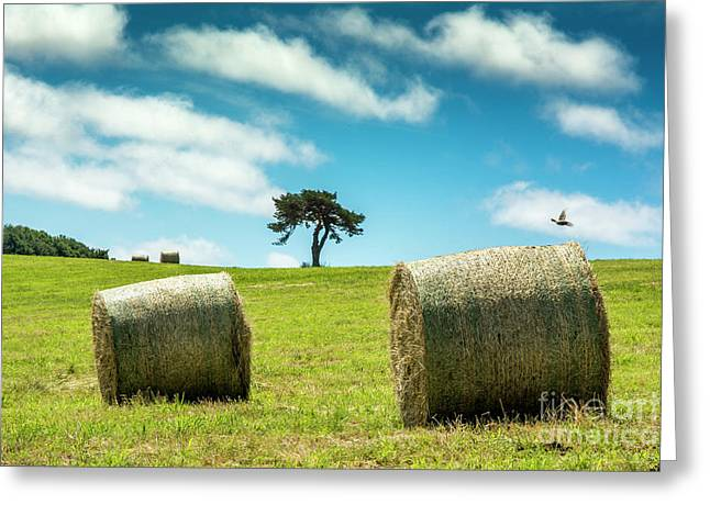 Bales Of Straw In A Field, Auvergne, France Greeting Card