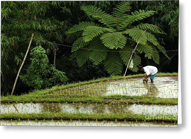 Bali Indonesia Rice Field Greeting Card by Bob Christopher