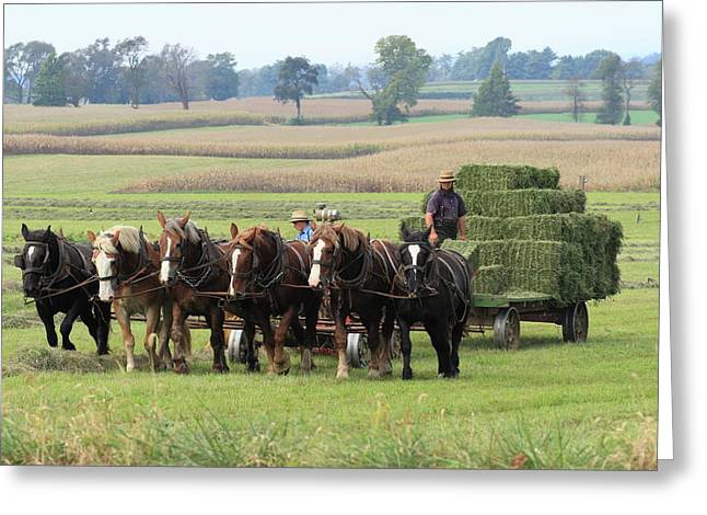 Baling The Hay Greeting Card by Lou Ford