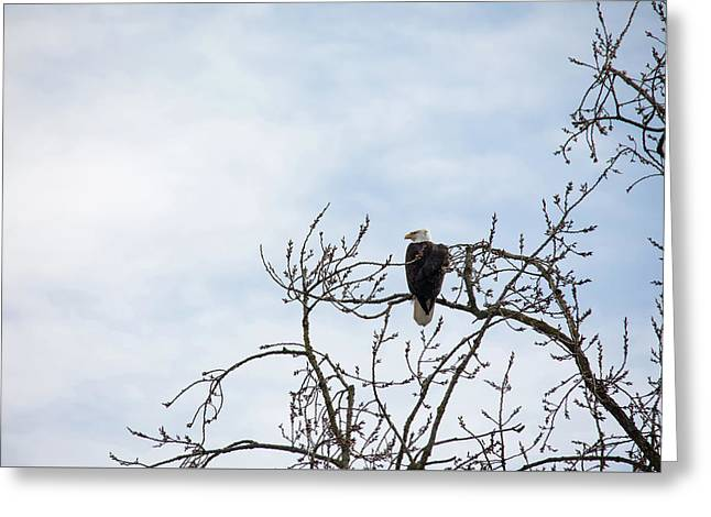 Greeting Card featuring the photograph Balk Eagle by Rebecca Cozart