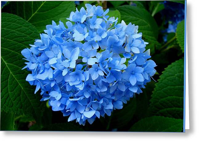 Ball Of Blue Greeting Card by Michiale Schneider