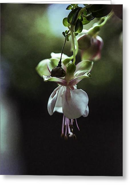 Greeting Card featuring the photograph Ballerina Flower by Paula Porterfield-Izzo
