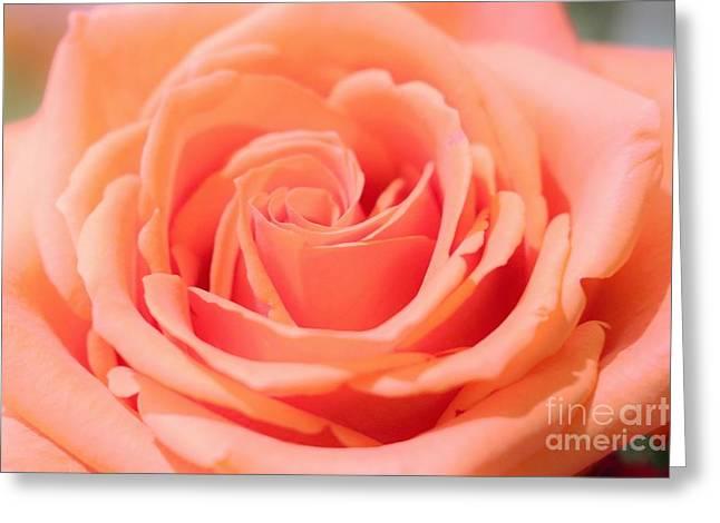 Ballet Pink Satin Rose Greeting Card