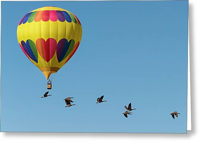 Balloon And Canada Geese Greeting Card