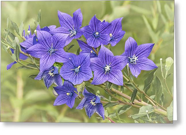 Balloon Flower Bouquet Greeting Card by Marcia Colelli