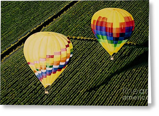 Balloons Over Napa Valley Greeting Card by Cindy Lee Longhini