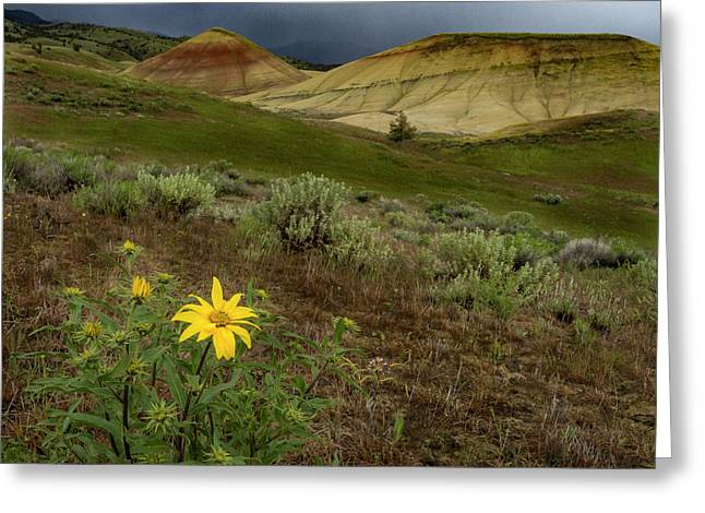 Balsam At Painted Hills Greeting Card by Jean Noren