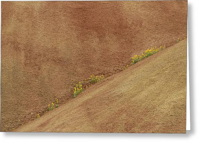 Balsam In Painted Hills Diagonal Greeting Card by Jean Noren