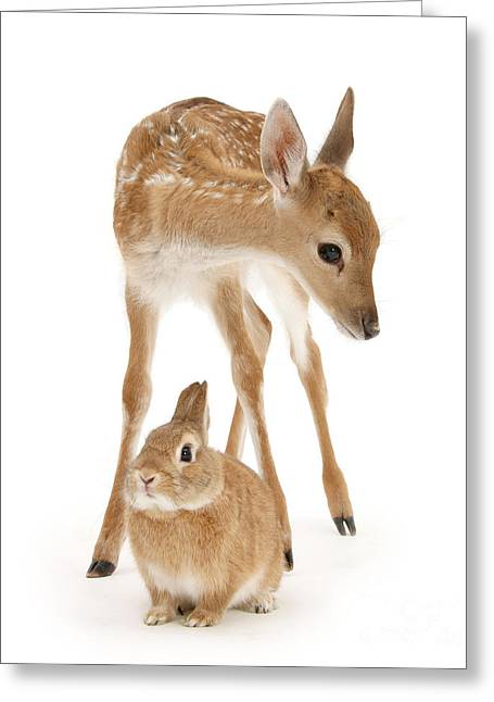 Bambi And Thumper Greeting Card