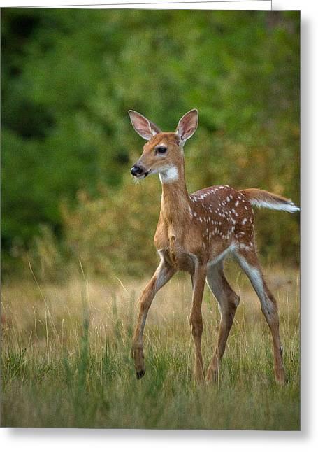 Bambi // Whitefish, Montana  Greeting Card