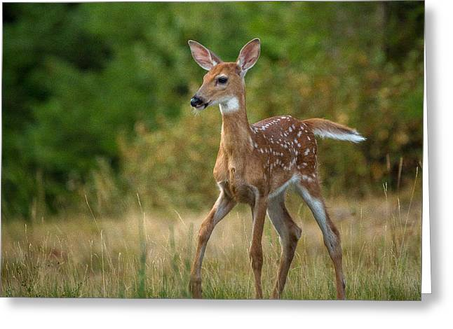 Bambi // Whitefish, Montana  Greeting Card