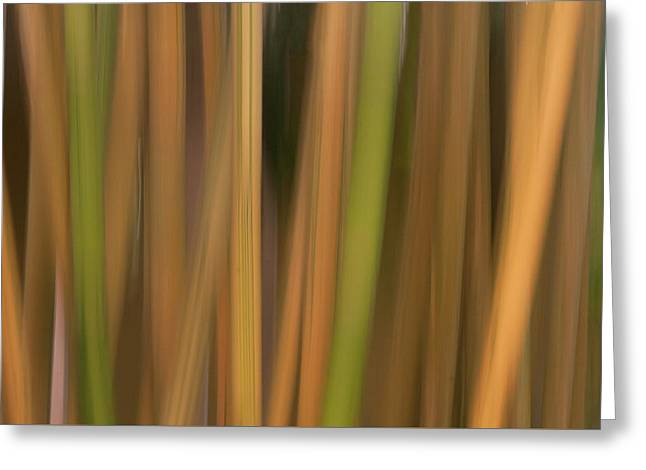 Bamboo Abstract Greeting Card by Carolyn Dalessandro