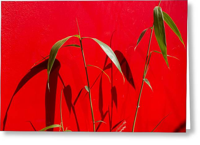 Bamboo Against Red Wall Greeting Card