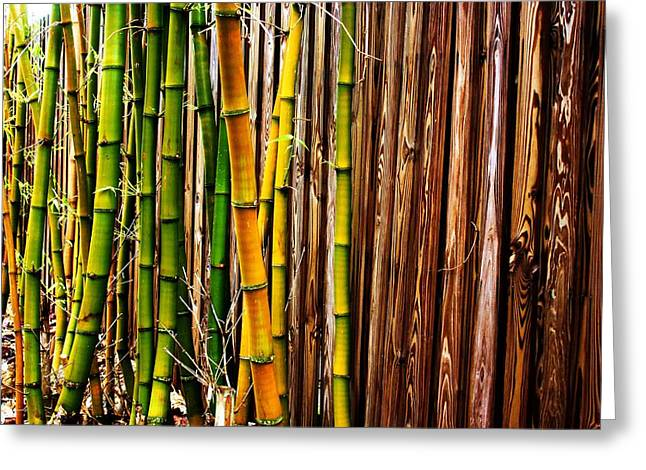 Bamboo Fence Greeting Cards - Bamboo Against Wooden Fence Greeting Card by Maria Young
