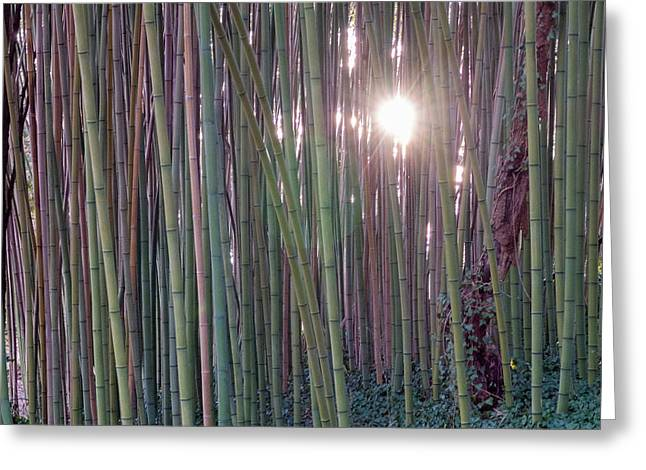 Bamboo And Ivy Greeting Card