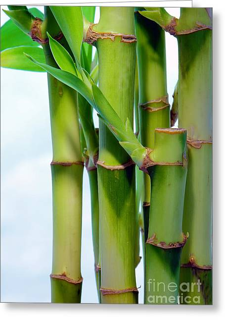 Bamboo And Sky Greeting Card