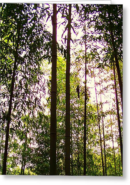 Bamboo And The Cuckoo Greeting Card by Michael C Crane