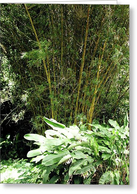 F8 Bamboo Greeting Card by Donald k Hall