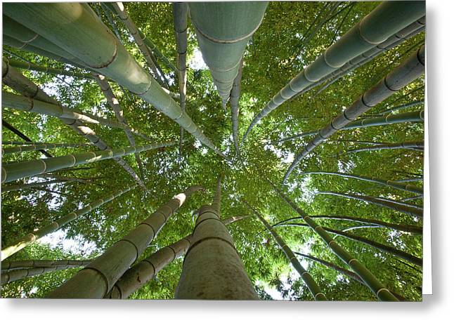 Bamboo Forest Greeting Card by Tom Clabough